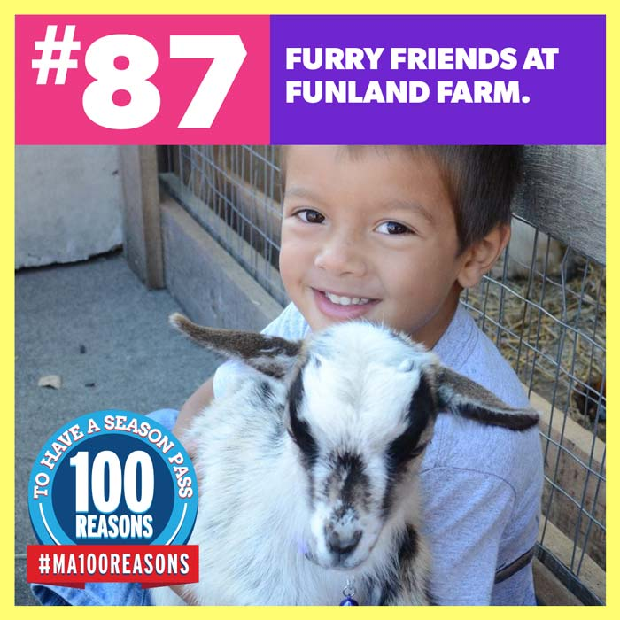 Furry friends at Funland Farm.
